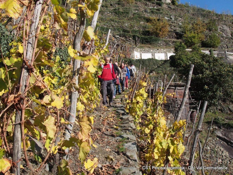 Tra uva e racconti escursioni nelle vigne del Ramìe