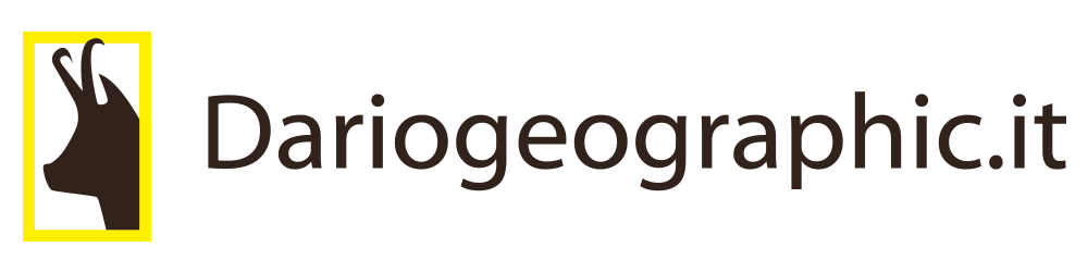logo 300x235